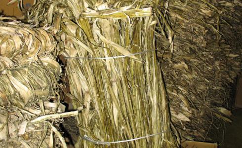 Paper mullberry fibre